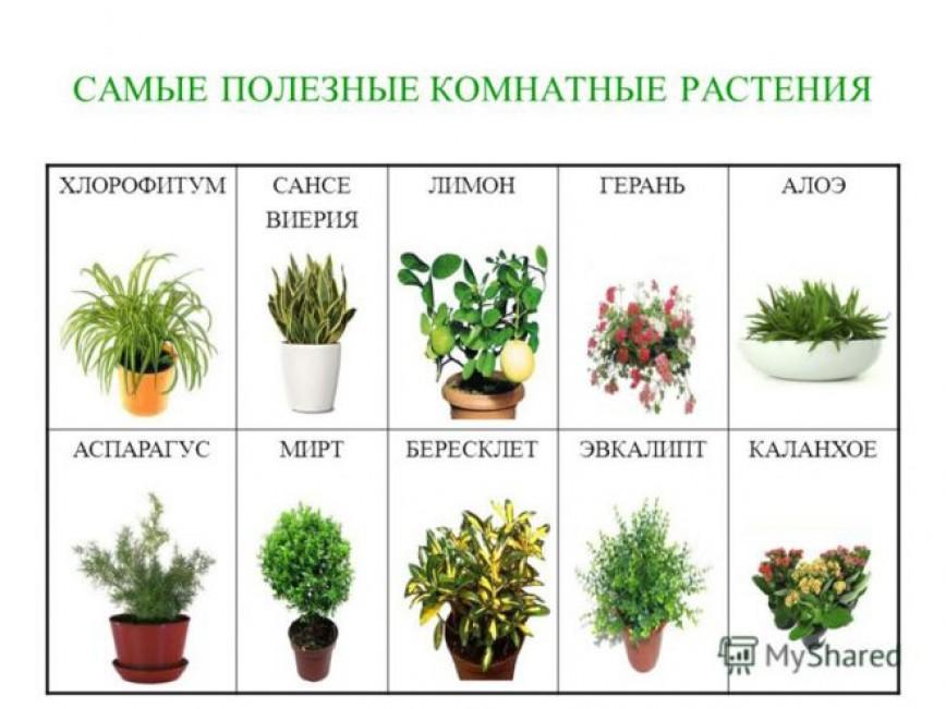 домашние цветы список с фото способ